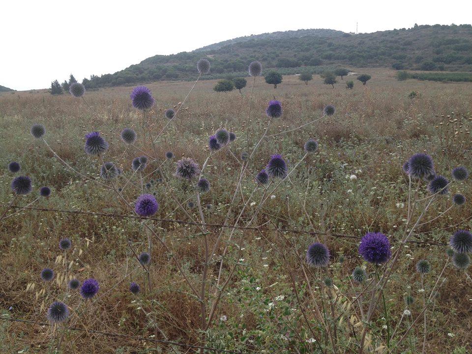 kibbutz-inbal-flowers.jpg